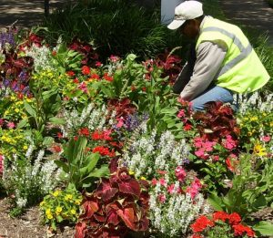 Choosing a Total Landscape Service Provider Is a Smart Investment