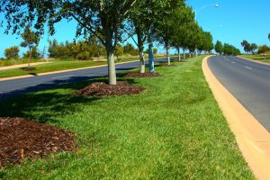 Tree Planting By Certified Arborists Makes All The Difference
