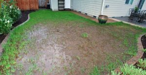 How Can Standing Water Affect My Property?