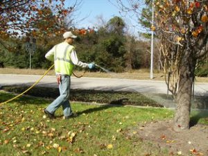 Weed Control Services Protect Commercial Property Health