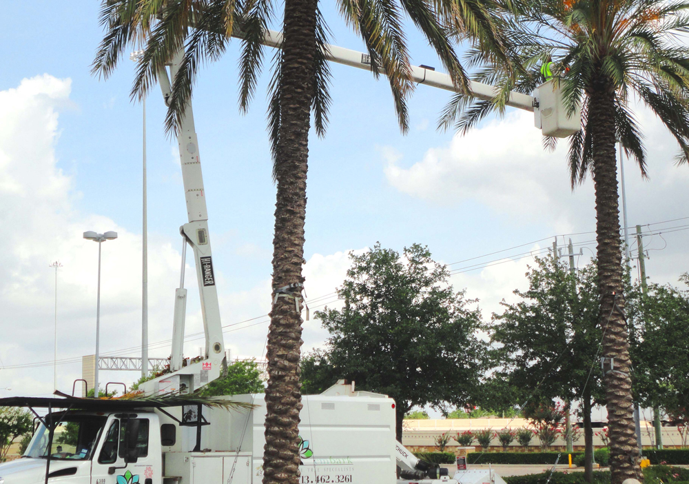 The Differences Between Certified Arborists and Basic Tree Trimmers