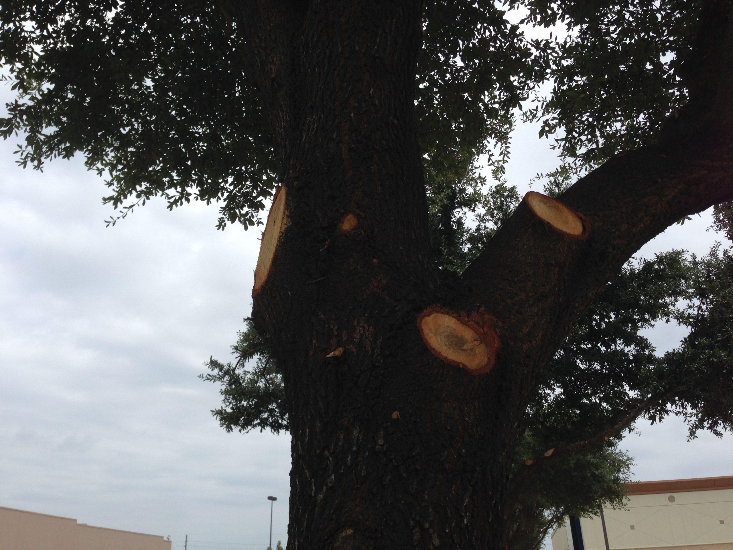 How Amateur Tree Trimmers Can Cause Trouble For Your Business