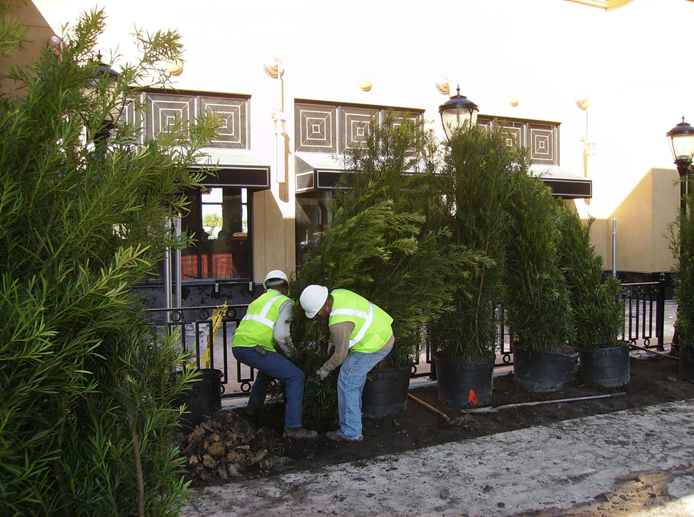 Commercial Landscape Improvements To Consider For The New Year