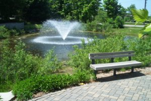 Can Vegetation Management Actually Help The Environment?
