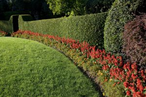 The Benefits of Adding Hedges To Your Property