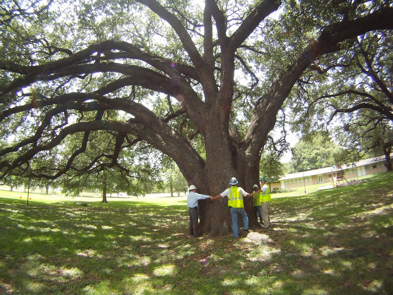 Three Ways Tree Preservation Impacts Communities