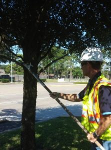 The Benefits of Having a Proactive Tree Care Provider