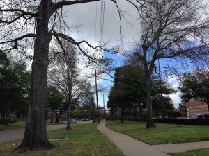 How To Avoid Problems Between Trees and Utility Lines
