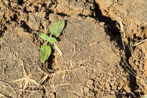 Three Ways To Reduce Soil Erosion on Your Commercial Property