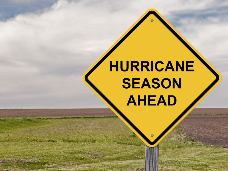 How To Prep Your Trees For Hurricane Season