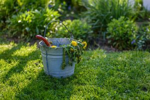 Three Threats To Your Commercial Lawns This Summer