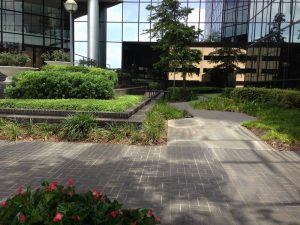 What Is Xeriscaping And How Does It Help Commercial Properties?