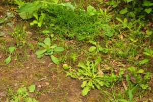 Why Weeds Are A Serious Threat To Property Health