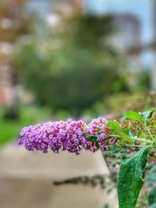 How can property managers and building owners turn the damage from the freeze of 2021 into a positive for their commercial landscaping?